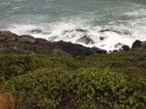 Bluff coastal path