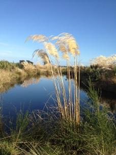 Waihopai river walk