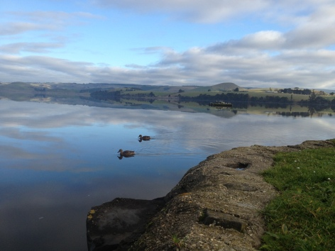 Lake Waihola 2