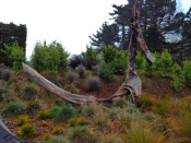 Stumpery sculpture