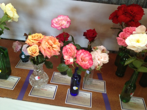 Prize roses