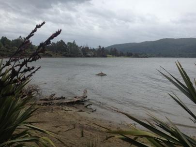 Te Anau wildlife park
