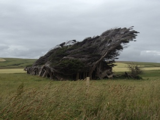winswept trees