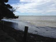 Coopers creek beach