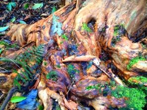A Gum Tree
