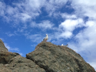 the gull wants me grub!