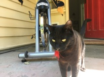 rehab cycling (with cat!)